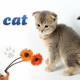 Cabinet Medical Veterinar Blue Cat Bucuresti